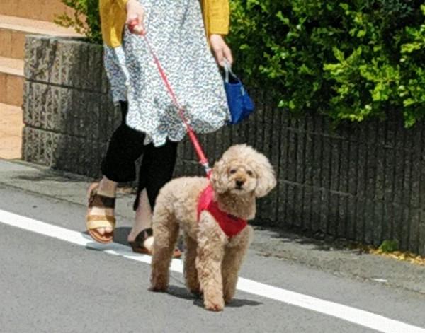 お散歩に・・・