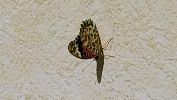 また蝶さんが・・・(^O^)